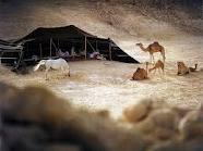 ورياض قلبي لشوف البدو محتاجه